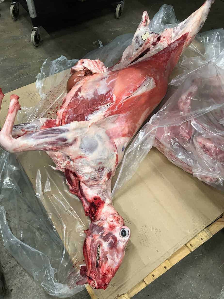 whole animal butchery class