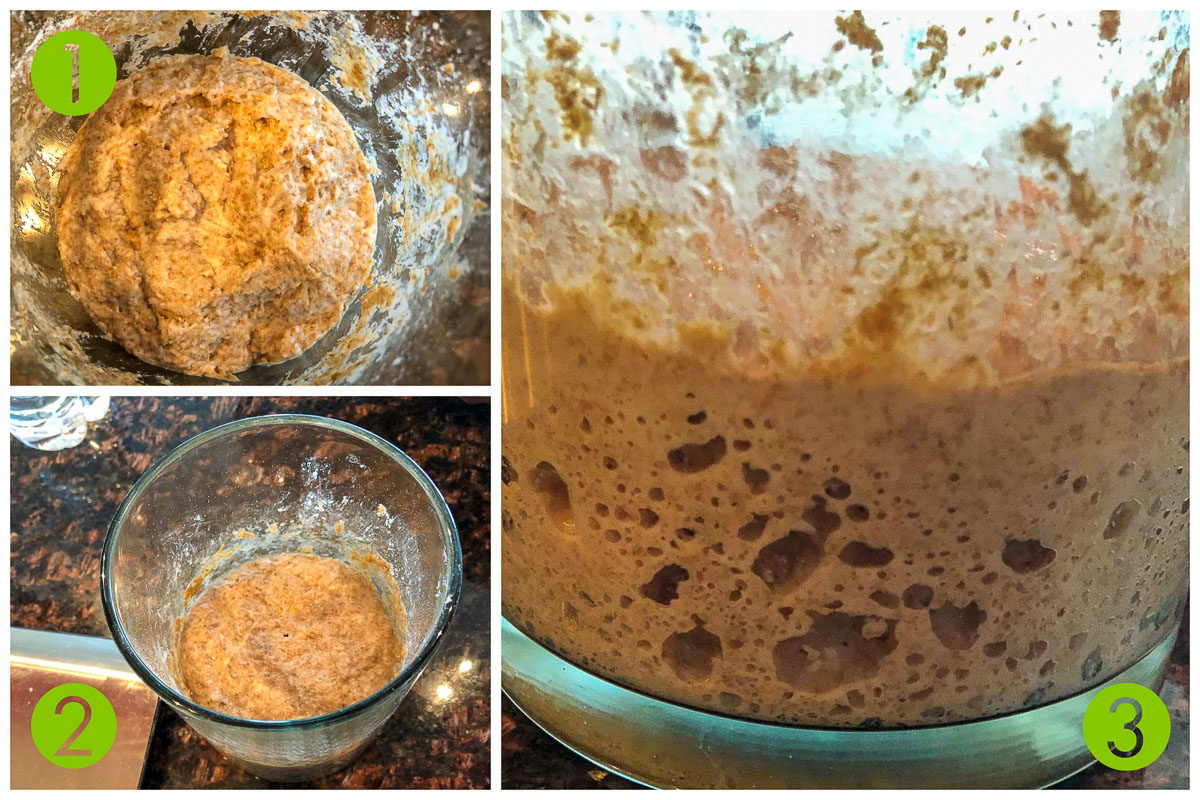 process shot of what sourdough starters look like. They are brown, bubbly, and overall fermented.